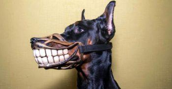 20 de curiozități despre câini, cei mai loiali prieteni ai noștri FEATURED.fw_compressed