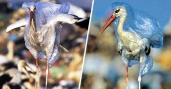 5 curiozități despre plastic, materialul ieftin care a ajuns sa ne sufoce