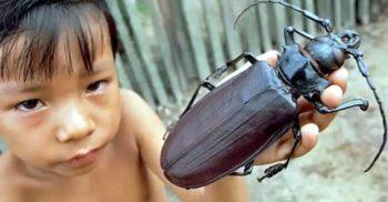 7 cele mai mari insecte din lume, pe care nu ai vrea să le întâlnești