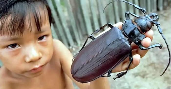 Cea mai mare insectă din lume a fost descoperită în China. Are 62 de cm!