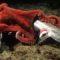 8 adevăruri uimitoare despre caracatițe, ființele cu 3 inimi featured_compressed