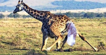 """8 nașteri și """"copilării"""" extreme din lumea animalelor"""