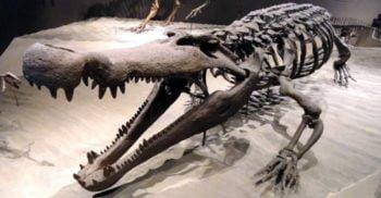 Descoperire rară în zona Hațeg: O nouă specie de crocodil preistoric