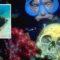 Laguna Truk, cel mai sinistru cimitir subacvatic din lume featured.fw_compressed