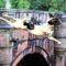 Misterul de la podul Overtoun, locul unde câinii se sinucid featured.fw_compressed