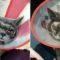 """O femeie din China i-a făcut operație estetică pisicii pentru că felina era """"prea urâtă"""" FEATURED_compressed"""