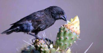 O nouă specie de pasăre a evoluat în Galapagos în doar două generații