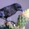O nouă specie de pasăre a evoluat în Galapagos în doar două generații featured_comp