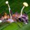 Parazitul perfect Această ciupercă poate controla mental furnicile, transformându-le în zombi featured.fw_compressed