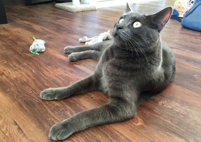 Pisica iarba