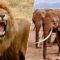 Un presupus braconier de rinoceri a fost strivit de elefanți și mâncat de lei featured_comp