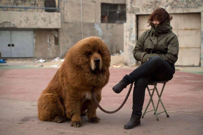 curiozități despre câini