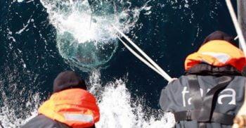Aproape 200.000 de virusuri nemaiîntâlnite au fost descoperite în ocean