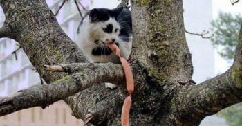 Australia va omorî două milioane de pisici cu cârnați otrăviți featured_compressed