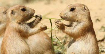 Care sunt, de fapt, granițele minții? 4 animale surprinzător de inteligente