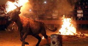 Cu coarnele incendiate, un taur panicat s-a izbit de un stâlp, murind pe loc