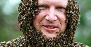 Curiozități despre albine: Societatea uimitoare a stăpânelor mierii