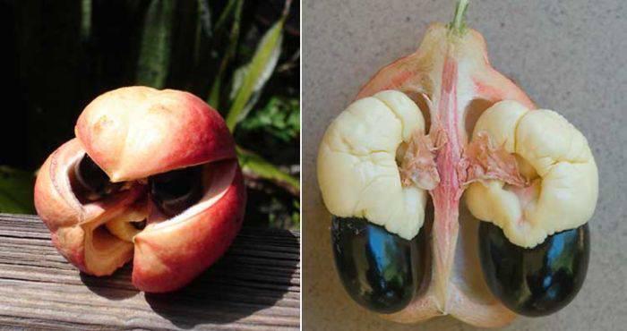Fructe si legume ciudate - Ackee