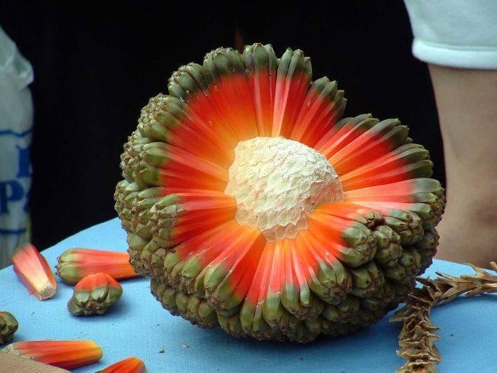 Fructe si legume ciudate - Hala