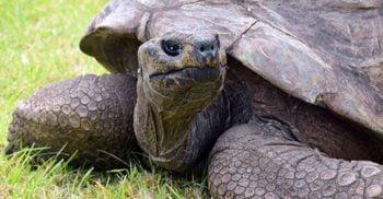 La 188 de ani, Jonathan este cel mai bătrân animal terestru din lume