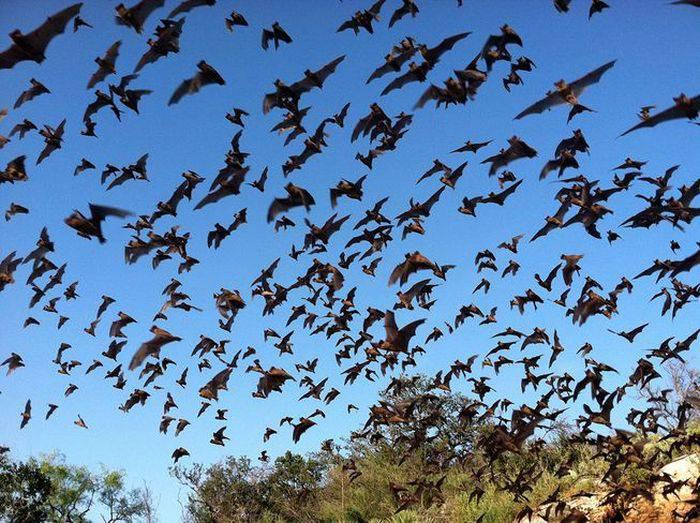 animale zburătoare