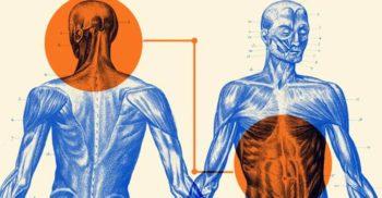 8 mistere ale corpului uman: trăsături, organe și funcții neînțelese