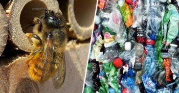 Albinele au început să își construiască cuiburi din plasticul pe care îl aruncăm