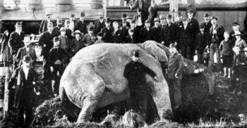 Jumbo, elefantul superstar alcoolic care a murit într-un accident de tren
