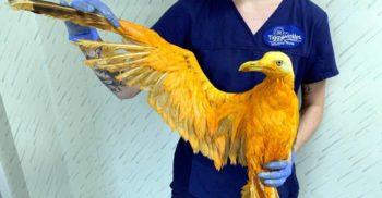 """""""Pasărea exotică"""" descoperită în Anglia s-a dovedit a fi un pescăruș tăvălit în curry"""