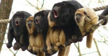 7 cele mai zgomotoase animale din lume
