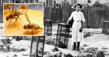 Beatrice White, fata de 15 ani care a omorât peste 500.000 de muște