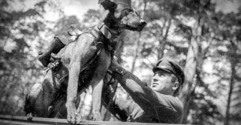 Câinii antitanc: Bombele cu patru picioare folosite de ruși în Al Doilea Război Mondial