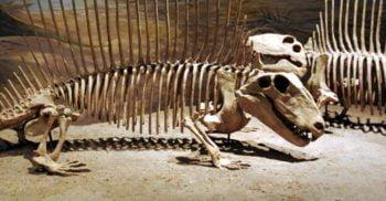 Cele mai ciudate animale dispărute: 7 specii preistorice neobișnuite