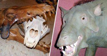 """Entelodontul, """"porcul din iad"""" de mărimea unui cal, cu dinți gigantici"""