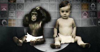 Experimentul Gua: Psihologul care a crescut un cimpanzeu ca pe copilul său