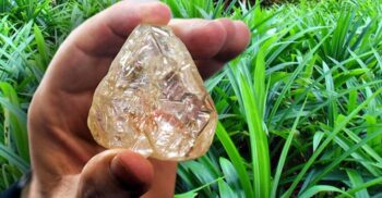 O plantă de miliarde: Palmierul care indică prezența diamantelor în sol