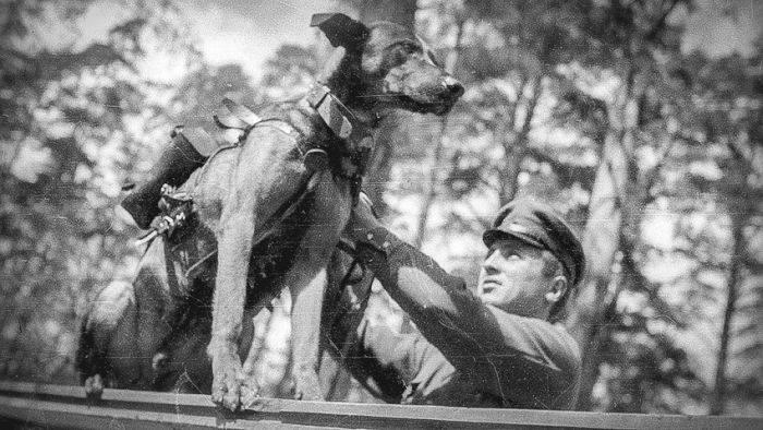 Câinii antitanc