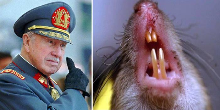 Tortura cu șobolani
