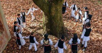 15 copaci din Europa cu povești impresionante
