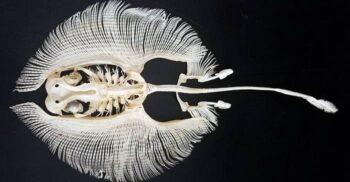 15 lucruri neobișnuite care există în natură