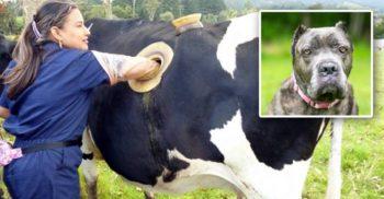 5 proceduri dubioase la care sunt supuse animalele