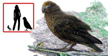 Hercule cel Neașteptat, cel mai mare papagal care a trăit vreodată