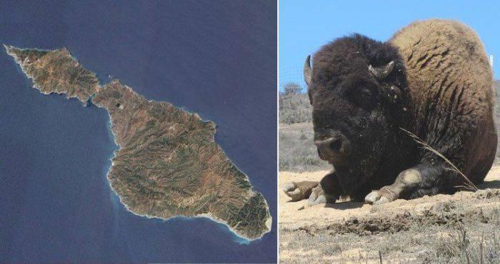 Insula Santa Catalina