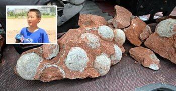 Un copil a descoperit accidental un cuib cu ouă de dinozaur de 66 de milioane de ani