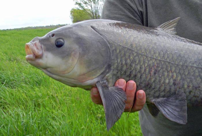 cel mai bătrân pește de apă dulce