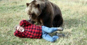 """8 curiozități despre urșii grizzly, """"mașinile de ucis"""" cu blana castanie"""
