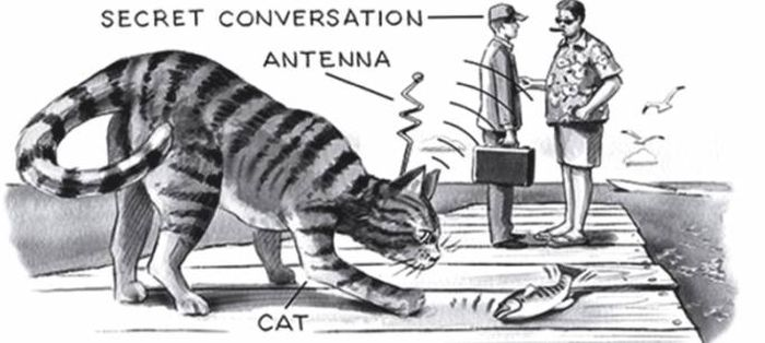 Pisica acustica 01