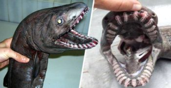10 creaturi terifiante care trăiesc în lumea întunericului