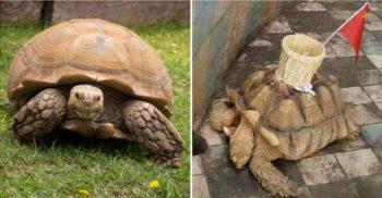 Angajații unui zoo au lipit un coș de o țestoasă pentru ca oamenii să arunce bani în el