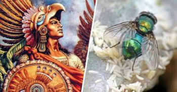 Ce mâncau aztecii: Ouăle de muște, caviarul precolumbian la mare preț